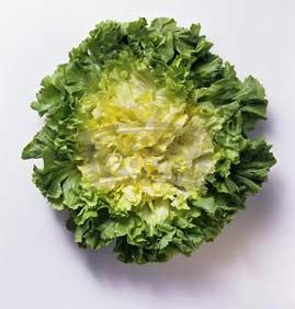Endive Letuce Salad