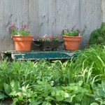 Can I Grow Vegetables In Winter?