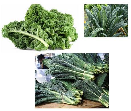 various types of kale